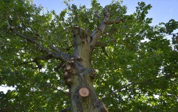 what is Caerphilly tree surgery?